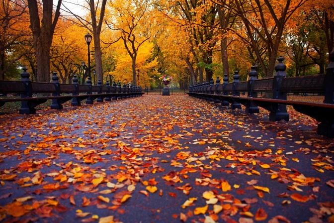 Flores e Cores: Casamento Outono/Inverno